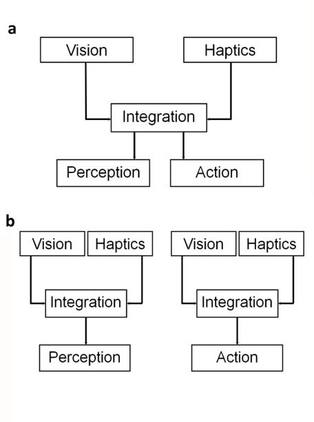 principle of haptic perception Human perception & information presentation •perception visual, auditiv, haptic, taste movement perception •the principle of movement.